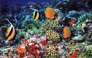 Pengertian Ekosistem Laut, Macam, Jenis,Manfaat,Ciri