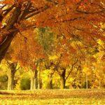 Pengertian, Ciri- ciri, Jenis Manfaat Ekosistem Darat