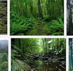 Pengertian,Jenis-jenis Hutan dan Fungsinya, Manfaat