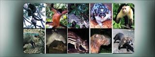 Daftar Nama Ilmiah/Latin Hewan dari A-Z TERLENGKAP