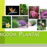 Pengertian, Ciri, dan Klasifikasi Kingdom Plantae Tumbuhan