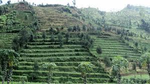 Pengertian Kenampakan Alam Buatan Indonesia Contoh Serta Gambar