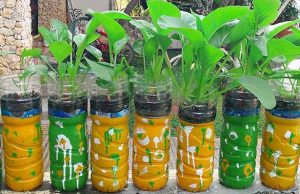 Pengertian dan Cara Membuat Tanaman Hidroponik