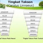 Pengertian, Klasifikasi, Ciri, Identifikasi Taksonomi Tumbuhan Kingdom Plantae