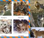 contoh hewan mamalia darat air, Ciri,Pengertian Mamalia